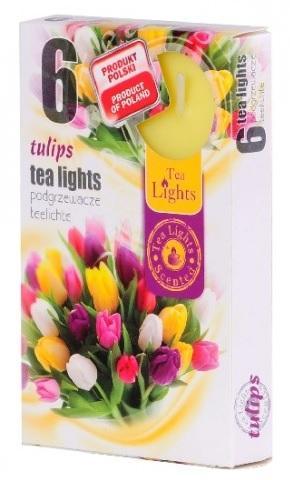 Z-Trade Vonné čajové svíčky, 6 ks, Tulips (tulipány)